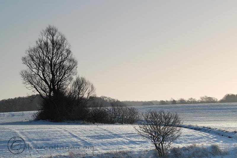 snowsunday02