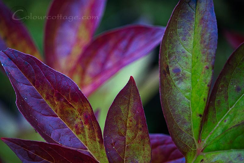 gardenfoliage02